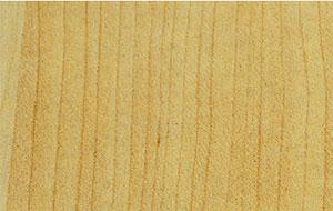 151-birch woodpore